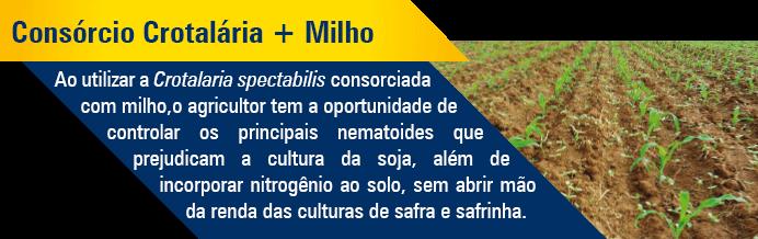 Crotalaria_Consorcio