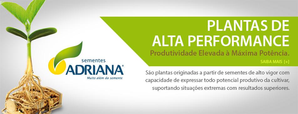 Sementes Adriana - Plantas de alta performance