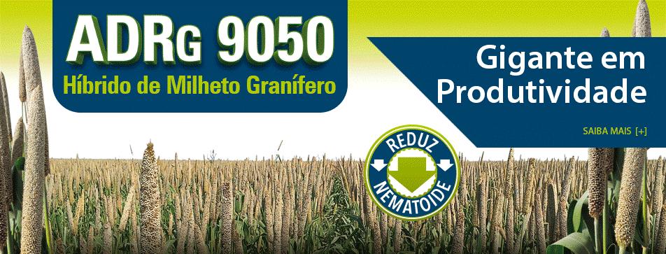 adrg-9050-hibrido-de-milheto-granifero-da-sementes-adriana